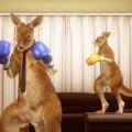 Roger The Kangaroo Won't Be In In Tekken 7