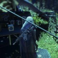 Explore Destiny 2's Social Area, The Farm, with this Video