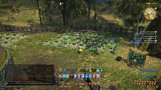 Final Fantasy XIV - Gysahl Greens 03 Chocobo Guide