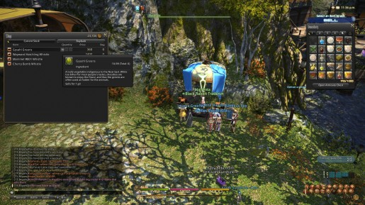 Final Fantasy XIV - Chocobo Guide 06